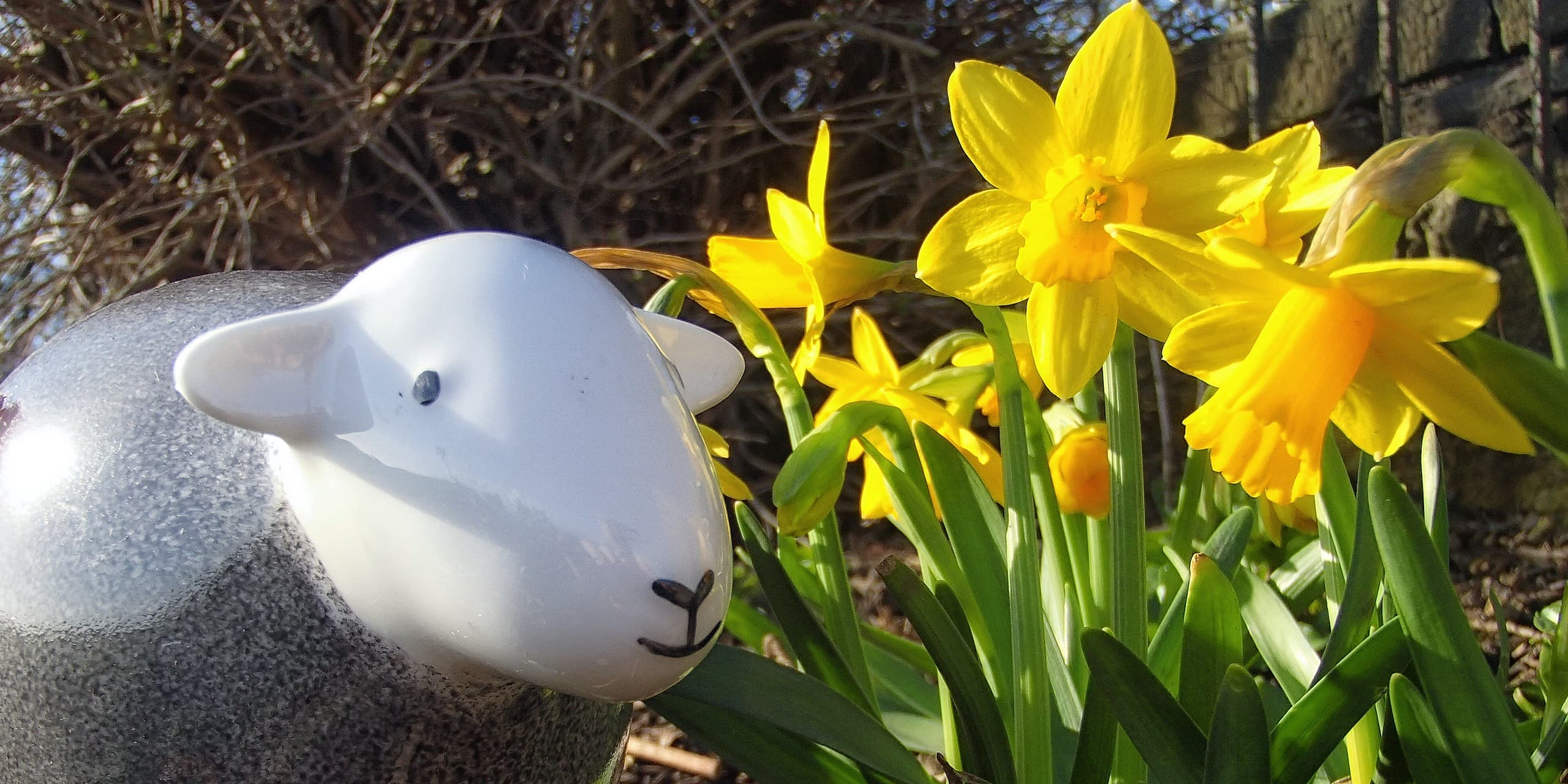 Daffodil Walks: Our Top 3 In The Lake District