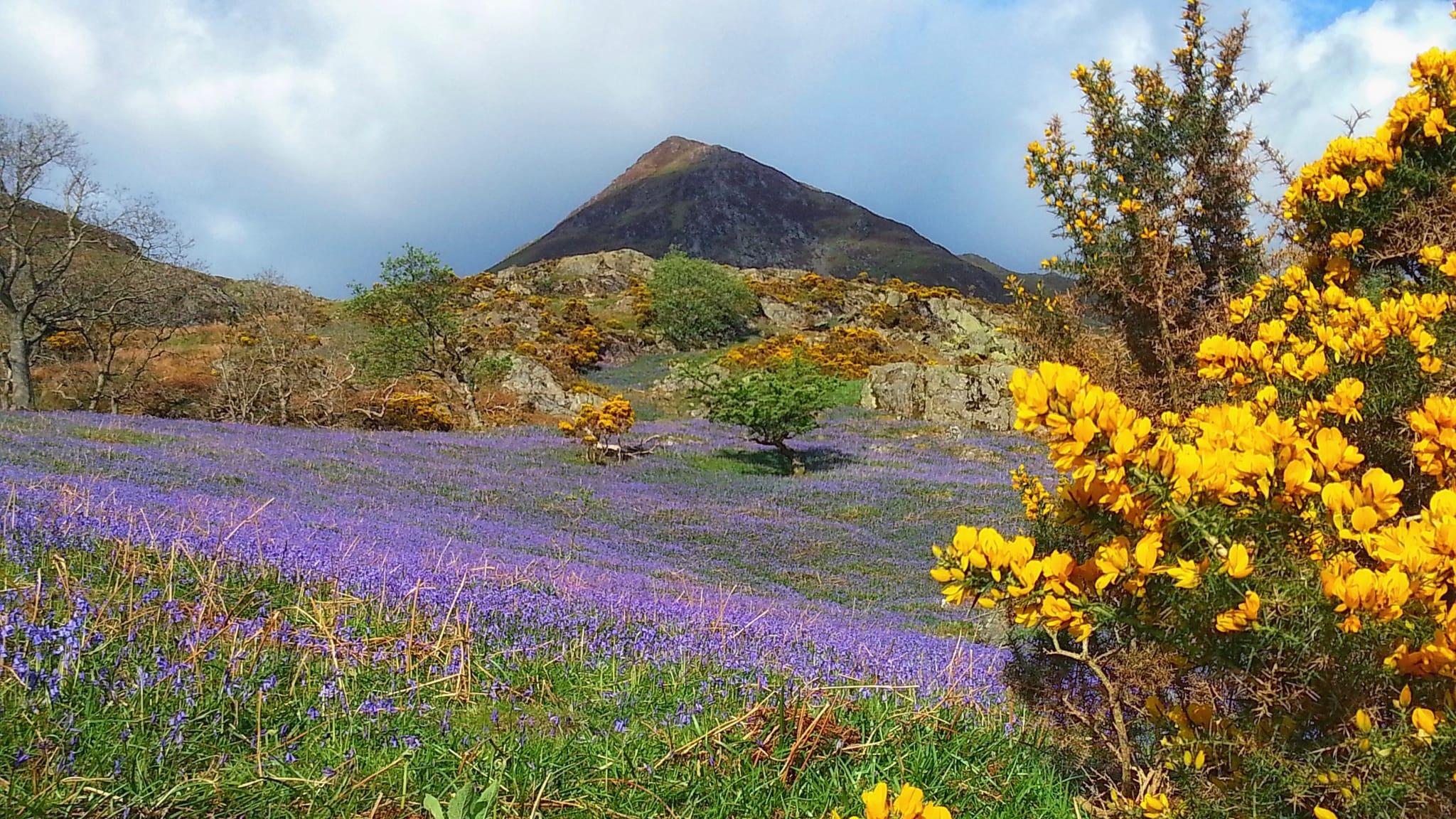 Four Bluebell Walks in Cumbria