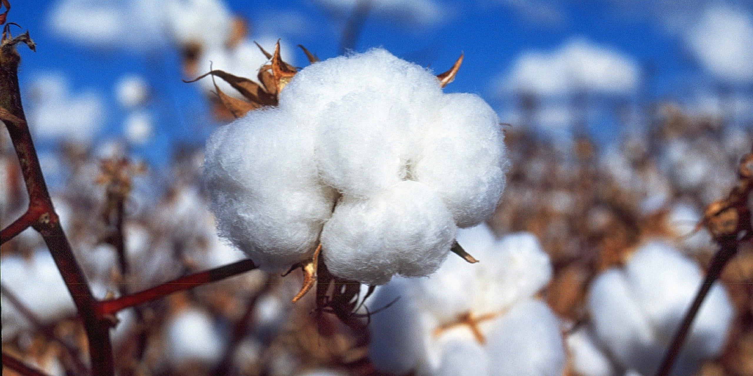 We Use GOTS Organic Cotton