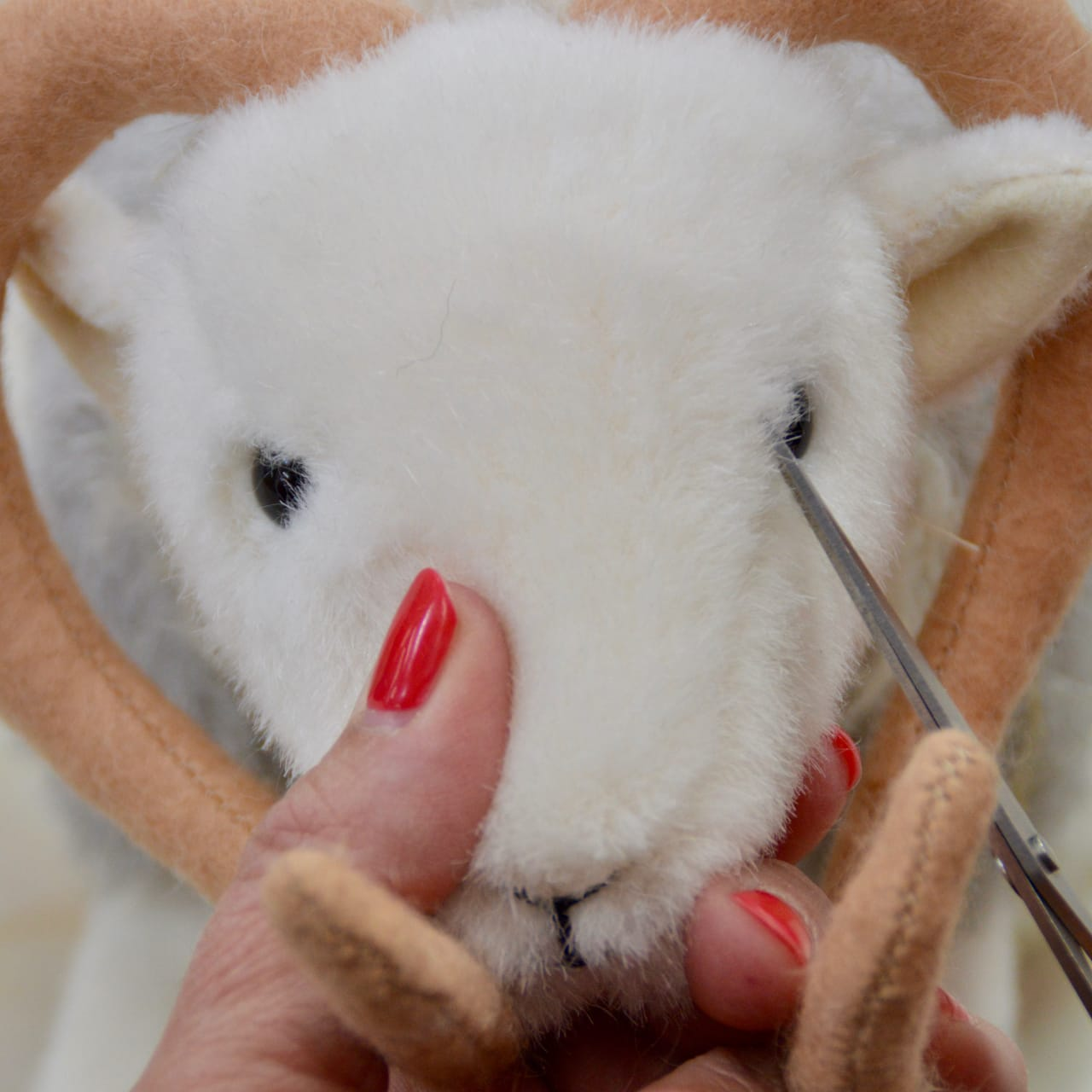 Final touches to that all-important face of My Herdy Tup