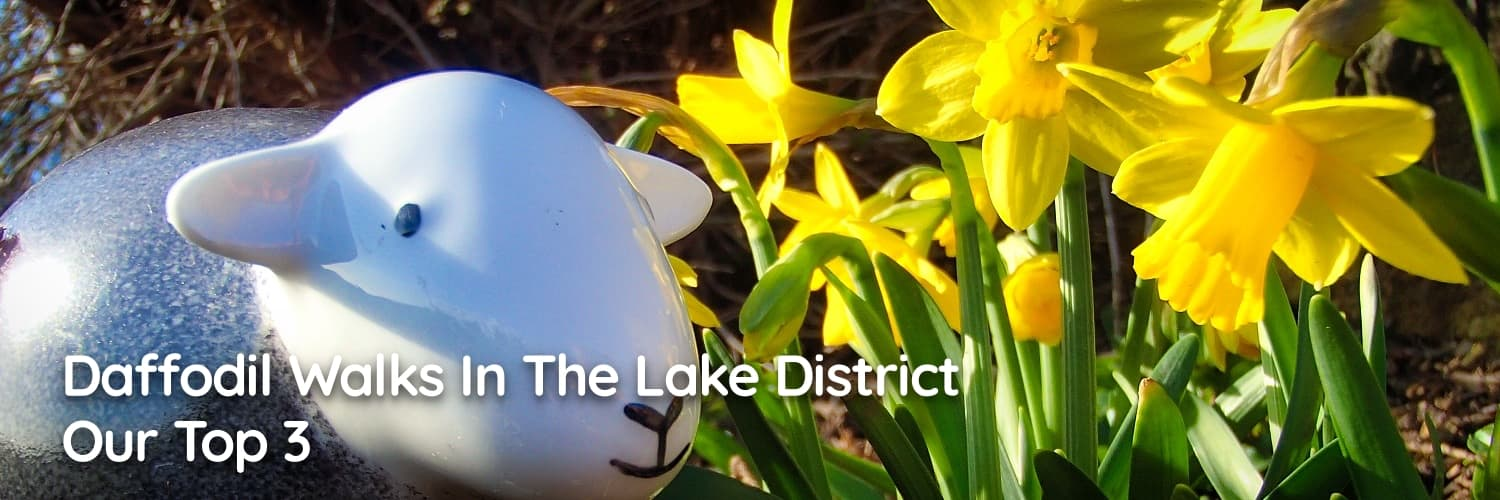 Our top 3 Daffodil walks in the Lake District