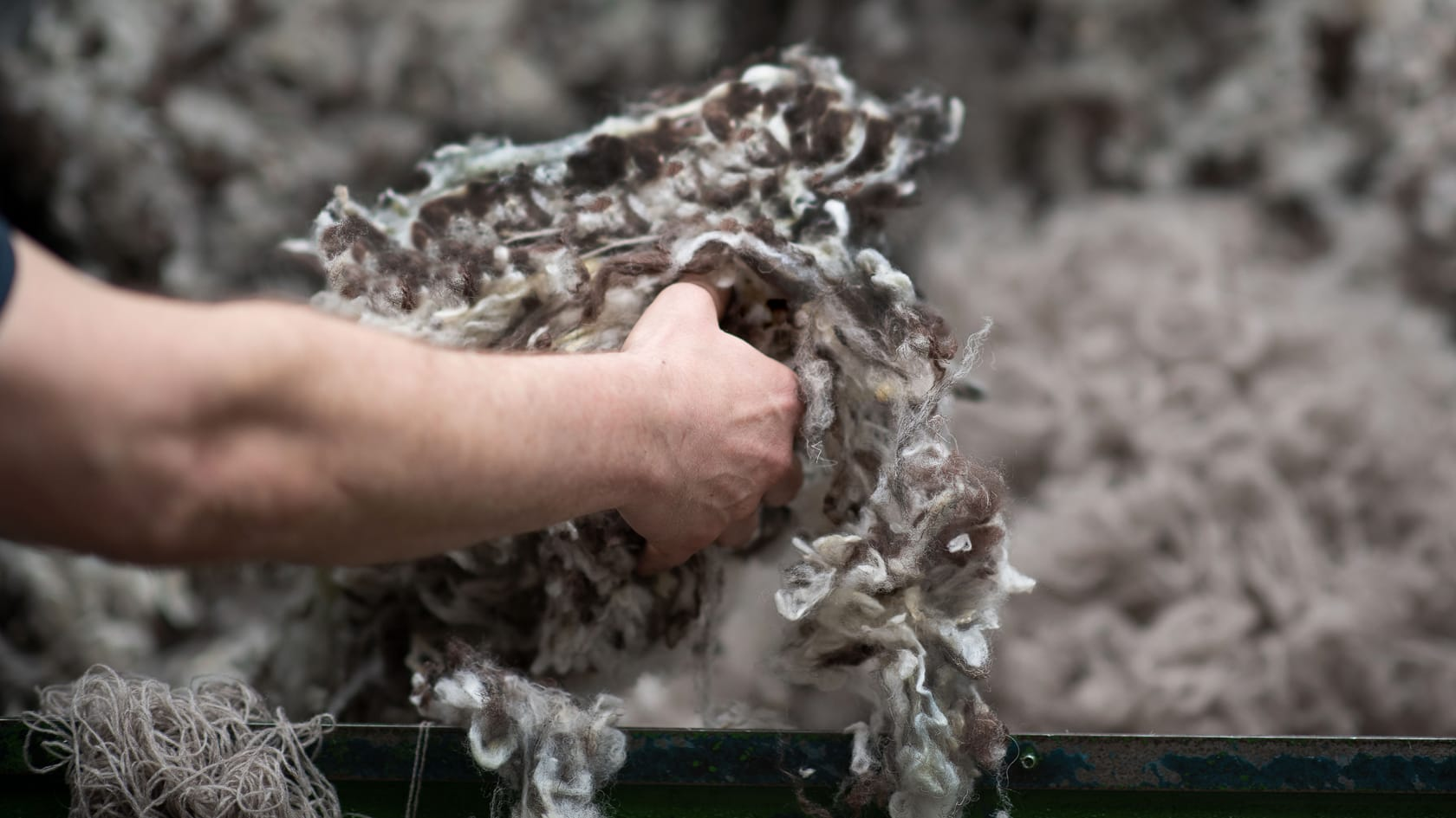 Our cleaned Herdwick wool blend gets put into the machines ready for processing