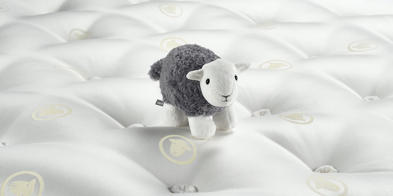 Sleep With The World's Cutest Sheep
