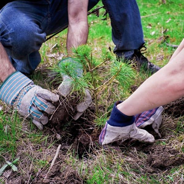 Tree planting. Photo by Alex Indigo, licensed CC-2.0